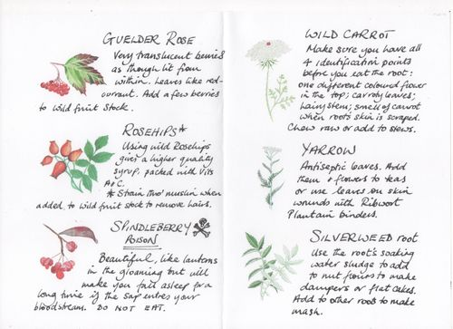 Autumn Wild Food Identification Booklet